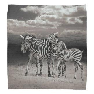 Wild Zebra Socialising in Africa Bandanna