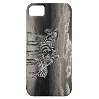 Wild Zebra Socialising in Africa Barely There iPhone 5 Case