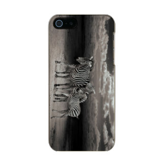 Wild Zebra Socialising in Africa Incipio Feather® Shine iPhone 5 Case