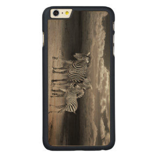 Wild Zebra Socialising in Africa iPhone 6 Plus Case