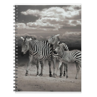 Wild Zebra Socialising in Africa Note Book