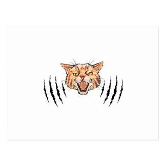 Wildcat Claw Marks Postcard