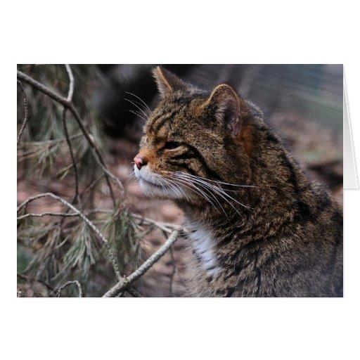 Wildcat Contentment 2 card