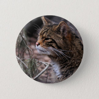 Wildcat Contentment 2 pin