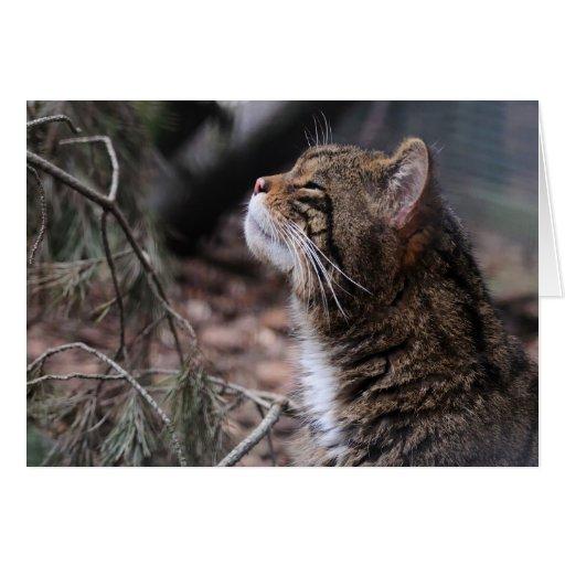 Wildcat Contentment card