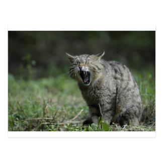 Wildcat Postcards