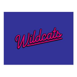 Wildcats in magenta postcard