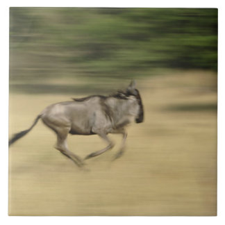 Wildebeest in motion, Connochaetes taurinus, Large Square Tile
