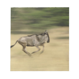 Wildebeest in motion, Connochaetes taurinus, Notepad