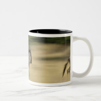 Wildebeest in motion, Connochaetes taurinus, Two-Tone Coffee Mug