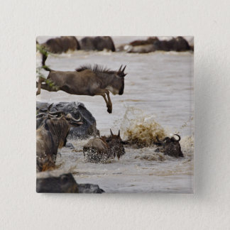 Wildebeest jumping into Mara River during 15 Cm Square Badge