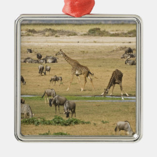 Wildebeests, Zebras and Giraffes gather at a Christmas Ornament