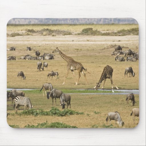 Wildebeests, Zebras and Giraffes gather at a Mousepad