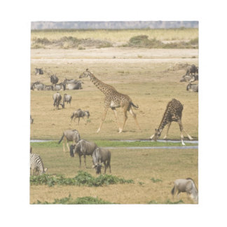 Wildebeests, Zebras and Giraffes gather at a Notepad