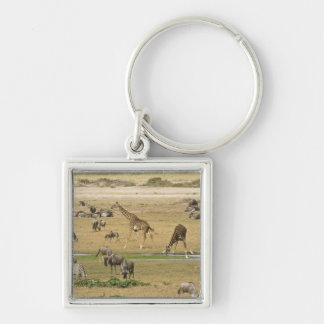 Wildebeests, Zebras and Giraffes gather at a Silver-Colored Square Key Ring