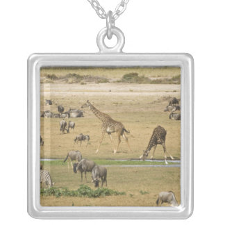 Wildebeests, Zebras and Giraffes gather at a Silver Plated Necklace