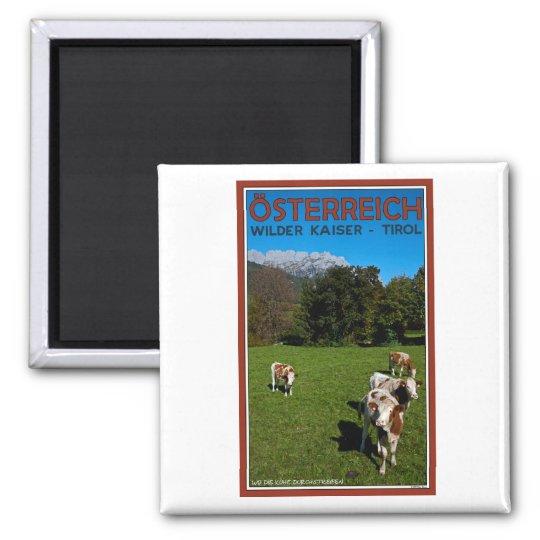 Wilder Kaiser - Cows Square Magnet