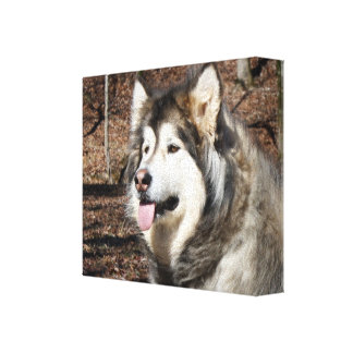 Wilderness Stretched Canvas Prints