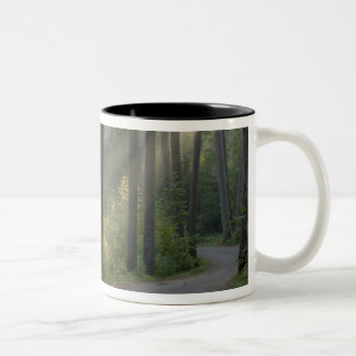 Wilderness Drive, Itasca State Park, Two-Tone Coffee Mug