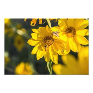 Wildflower and bee photo art