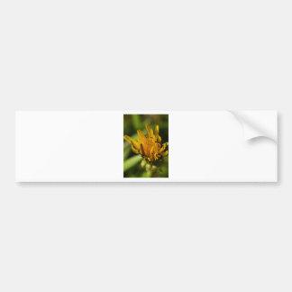 Wildflower Bumper Stickers