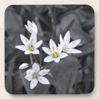 Wildflower Cluster Macro Photo Cork Back Coasters