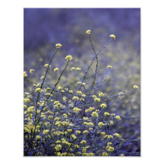 Wildflower Dance Photo Print