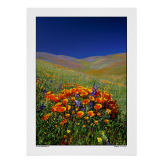 Wildflower Hills Poster