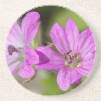 wildflower in the garden coaster
