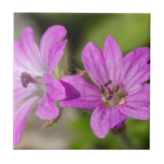 wildflower in the garden small square tile