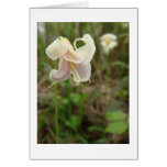 Wildflower lily cards