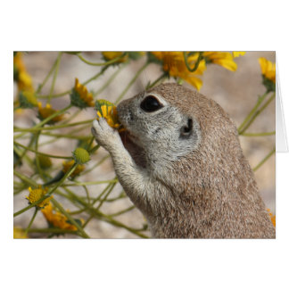 Wildflower Snack Card