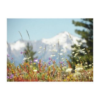 Wildflowers and Elkhorns Stretched Canvas Prints