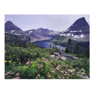 Wildflowers and Hidden Lake Shrubby Post Card
