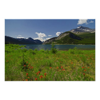 Wildflowers and Mountains Poster