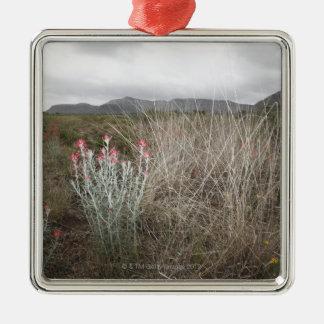 Wildflowers and Plants, Del Rio, Texas, USA Christmas Ornament