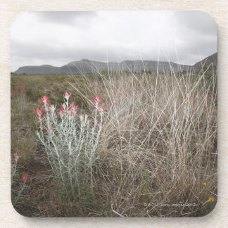 Wildflowers and Plants, Del Rio, Texas, USA Coaster