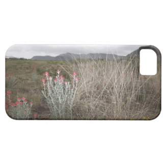 Wildflowers and Plants, Del Rio, Texas, USA iPhone 5 Case