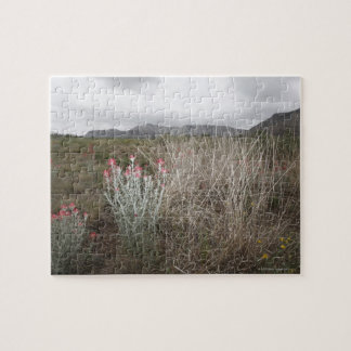Wildflowers and Plants, Del Rio, Texas, USA Jigsaw Puzzle