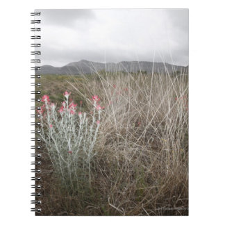 Wildflowers and Plants, Del Rio, Texas, USA Notebooks