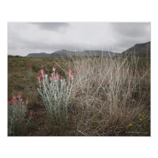 Wildflowers and Plants, Del Rio, Texas, USA Poster