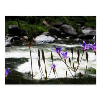 Wildflowers and Rivers Postcard