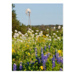 Wildflowers And Windmill In Texas Hill Country Postcard