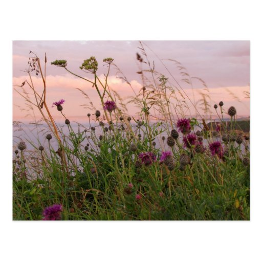 Wildflowers at Dusk Post Cards