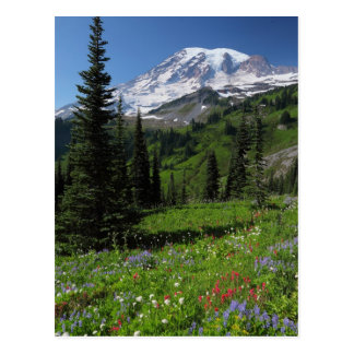 Wildflowers at Mount Rainier Postcard
