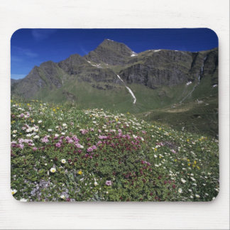 Wildflowers, blooming, Alps, Switzerland Mouse Mat