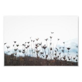Wildflowers Born Again Photo Art