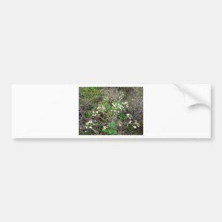 Wildflowers Bumper Stickers