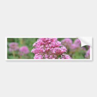 Wildflowers By The Sea Car Bumper Sticker