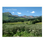 Wildflowers in Crested Butte Post Card